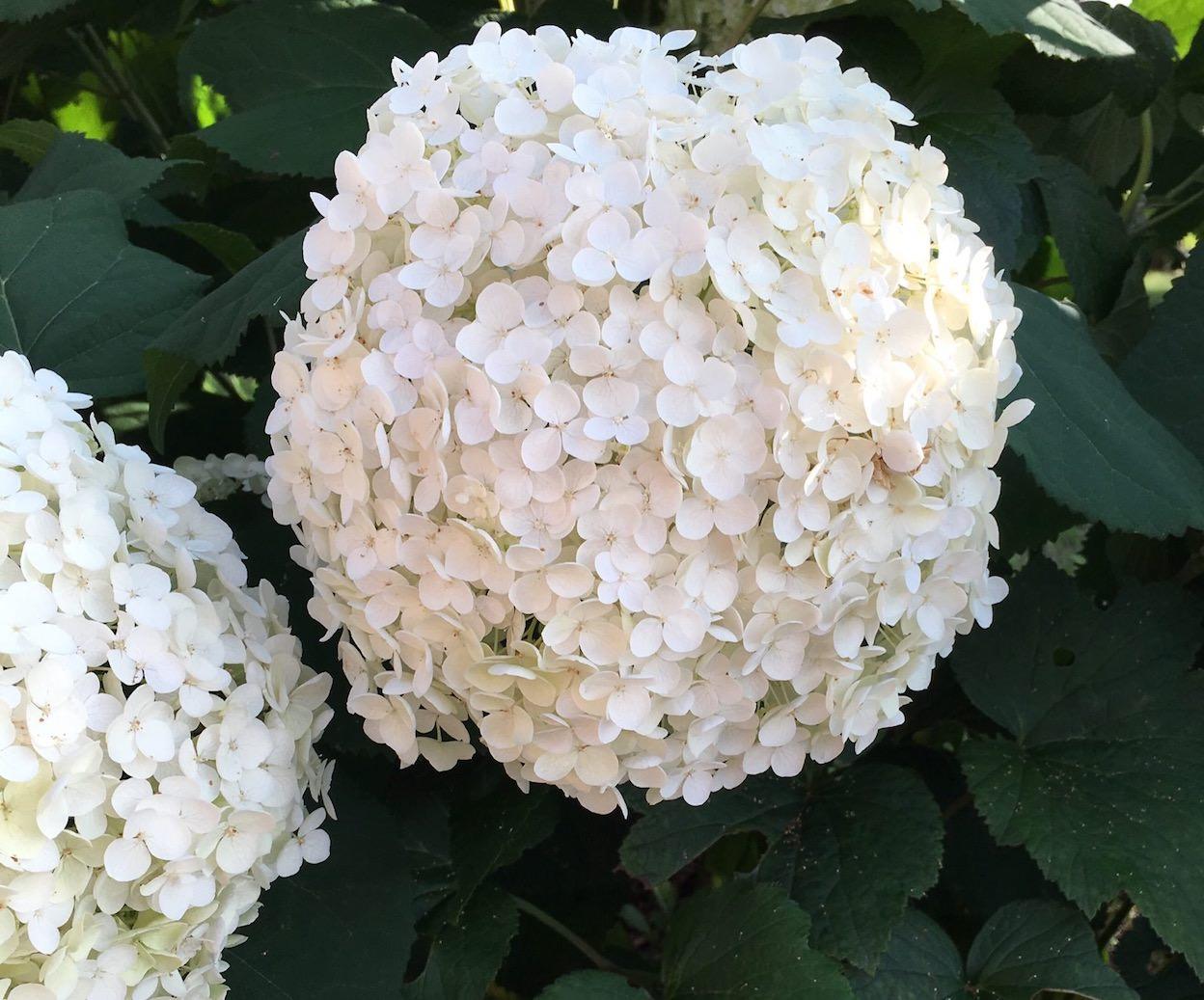開滿一大朵的花