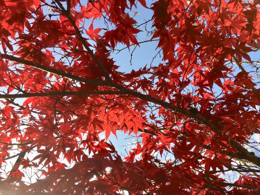 加拿大溫哥華遊記 - 加拿大的紅